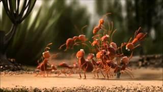http://2gympsilkalymn.files.wordpress.com/2013/01/ants.jpg